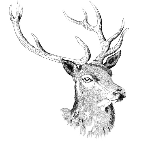 Red Deer Club's avatar
