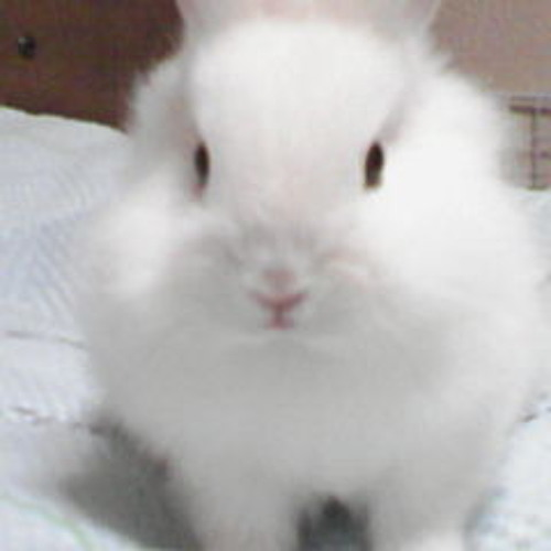 zyasmine's avatar