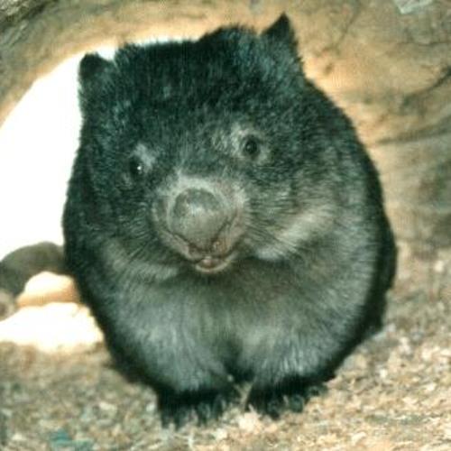 Wombat !'s avatar