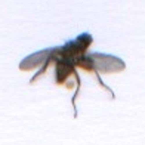 batfasterthantherat's avatar