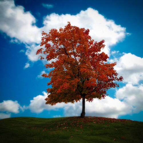 Autumn Hill's avatar