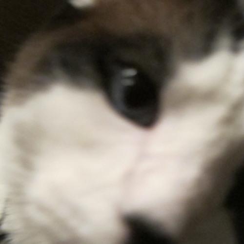 sweetenigma's avatar