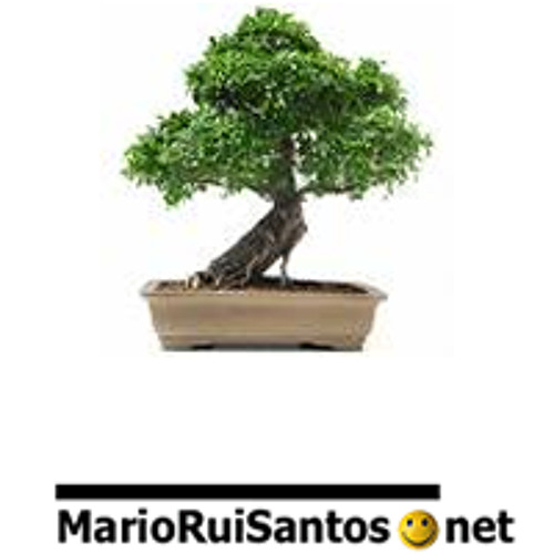 marioruisantos's avatar