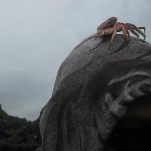 skidrock's avatar