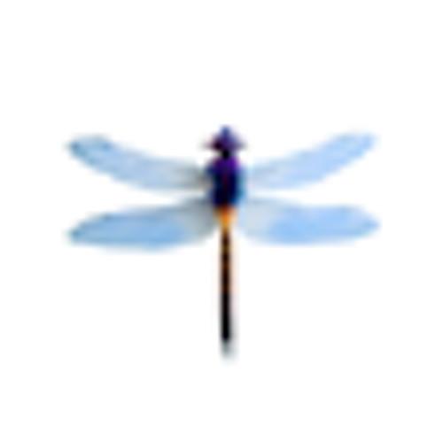 lincolny's avatar