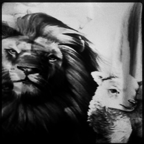 TheLamentations's avatar