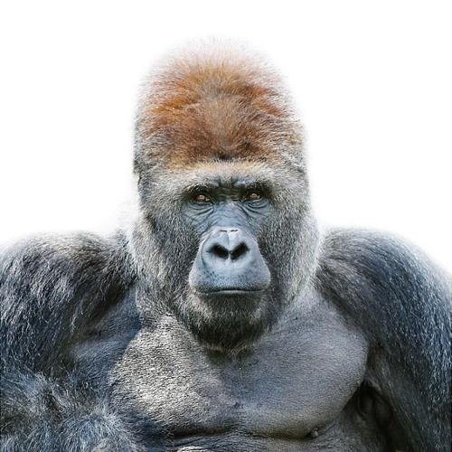 Dieuzdonne's avatar