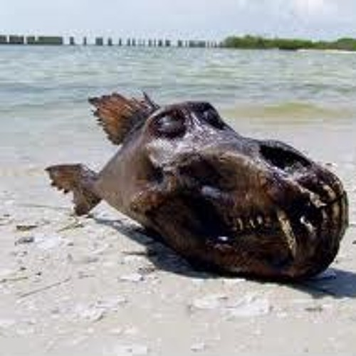 Scrotefish's avatar