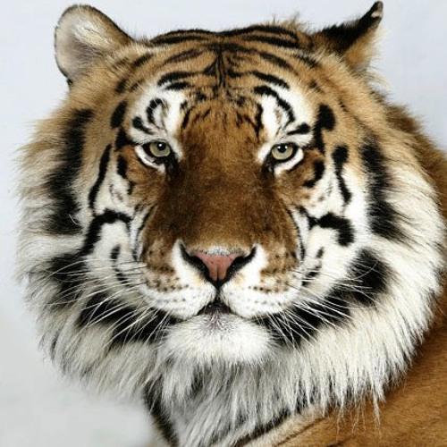brisd's avatar