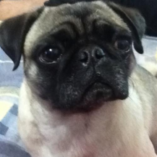 c-sar-fajardo's avatar