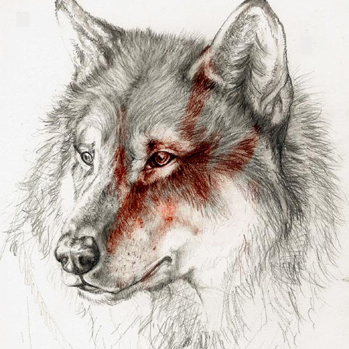 WolfPark's avatar