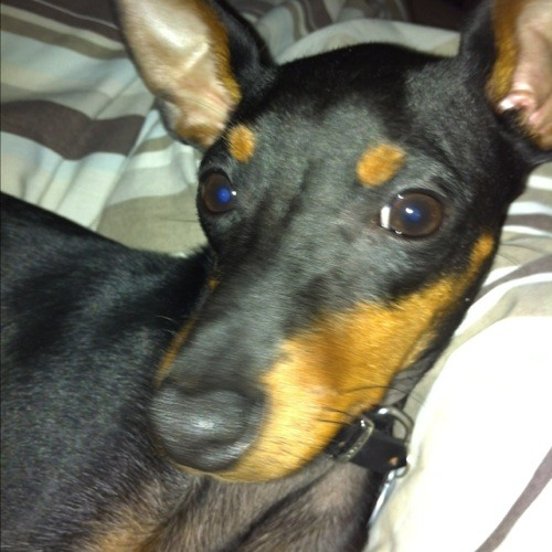 Derekthedog's avatar