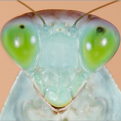 herve dutilleul's avatar