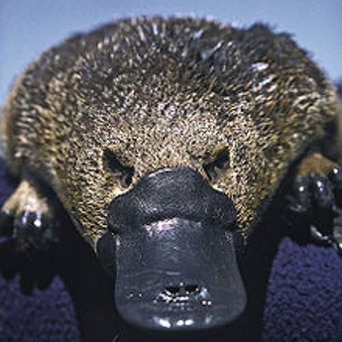 ToHoM's avatar