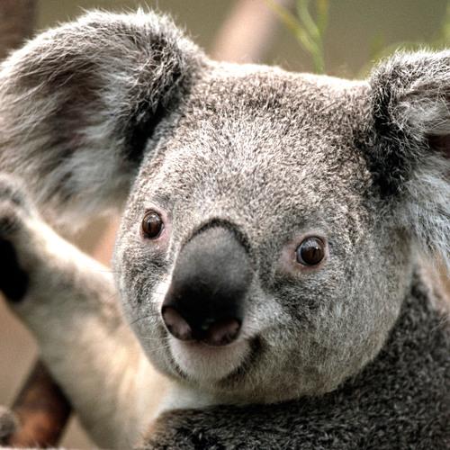 Funky Koala's avatar