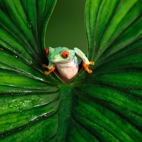 Frog kaminorecords's avatar