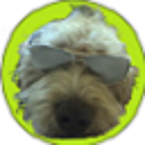 festivaldogs.eu's avatar