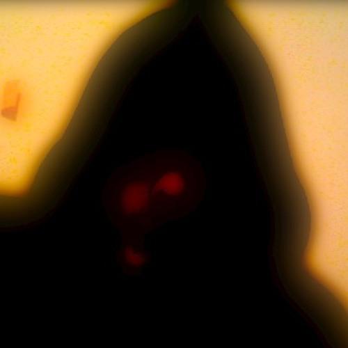 Suangi's avatar