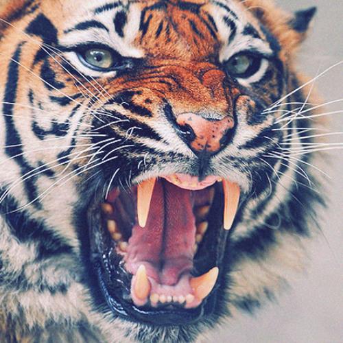 Tigre Hoods's avatar