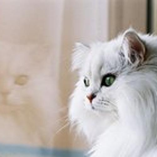 Felincine's avatar