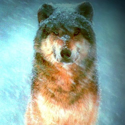InfinityDubstep845's avatar