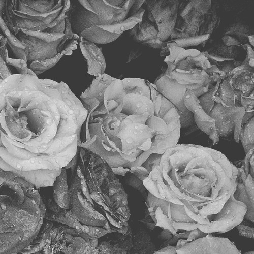 FUNERAL FLOWERS's avatar
