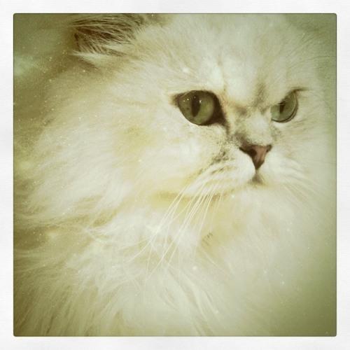 Cat Sand's avatar