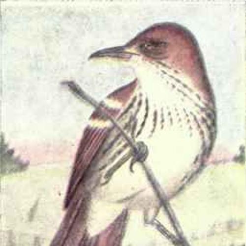 Bird City Revolutionaries's avatar
