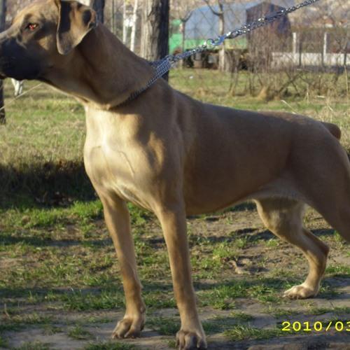 Serbian ghetto doggs's avatar
