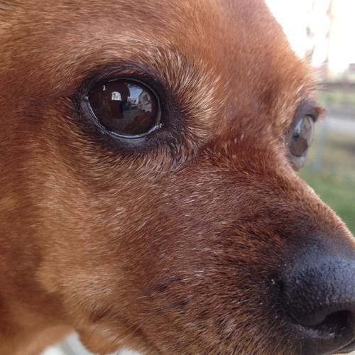 12 Paws's avatar