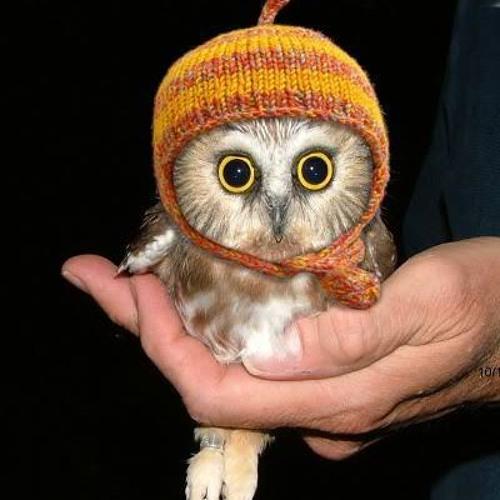 knight owl's avatar