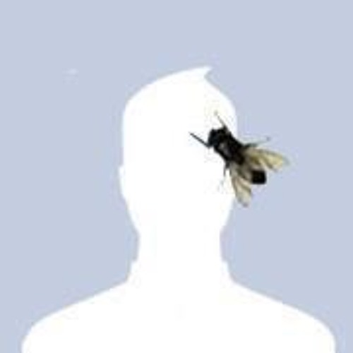 Nick Honold's avatar