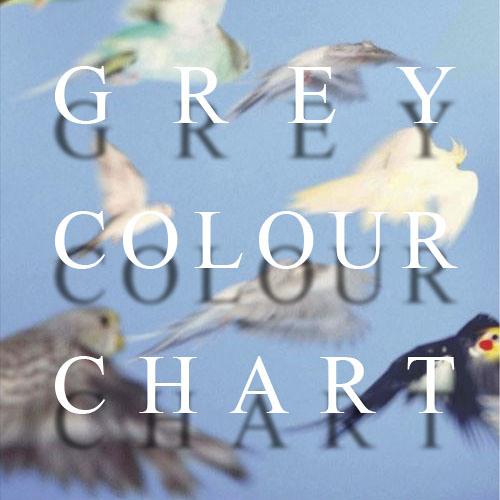 Grey Colour Chart's avatar
