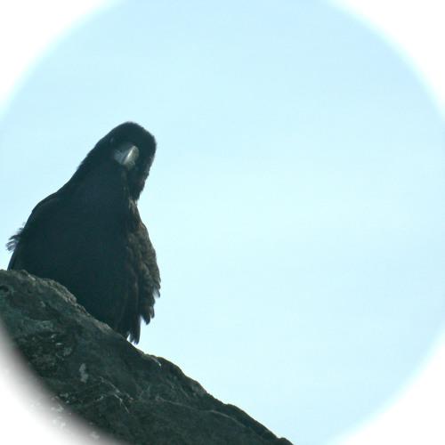 Bird People's avatar