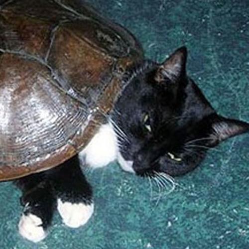Turtlecat Symphony's avatar