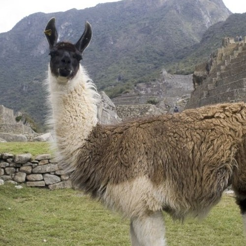 Meadow Llama's avatar