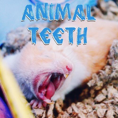 Animal Teeth's avatar