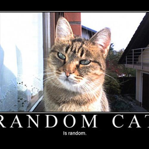 The Random Cat's avatar
