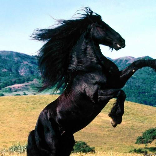 Jake Blackhorse's avatar