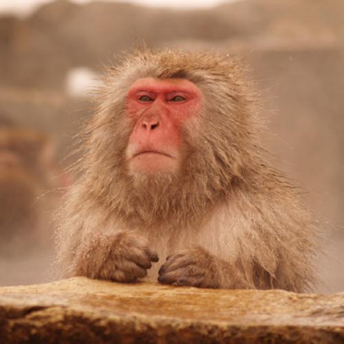 goldencut's avatar