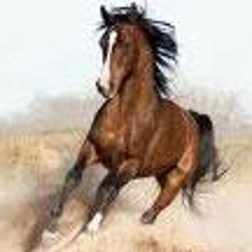 Reading Horse ebooks's avatar