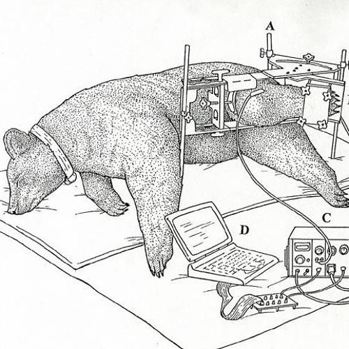 E-Bear's avatar