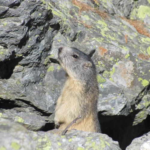 The Marmot Band's avatar