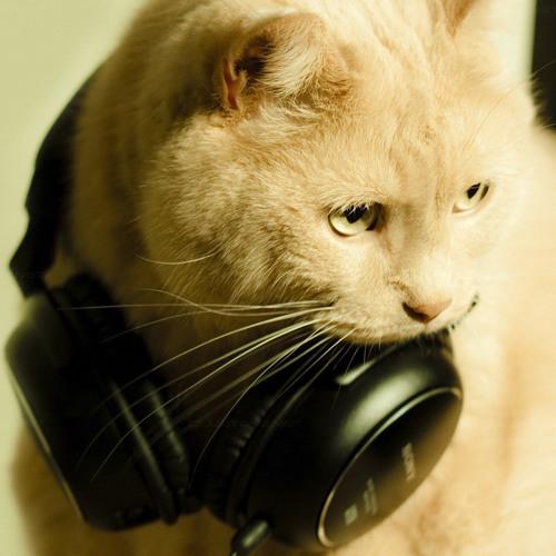 Cat's avatar