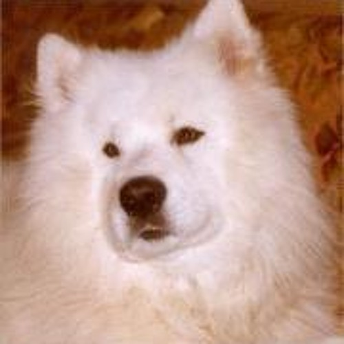 Ankie Jet Ettah's avatar