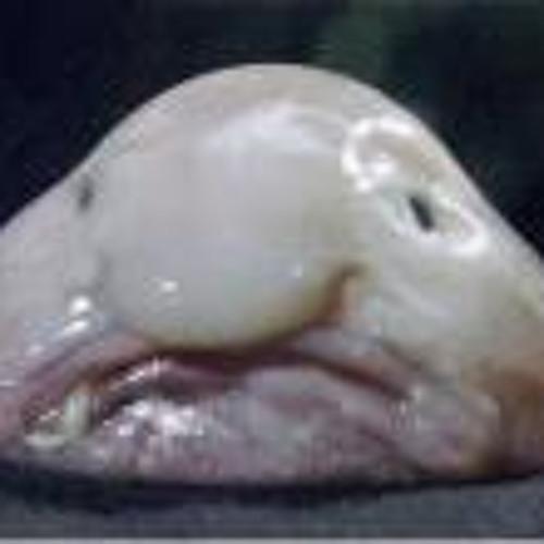 Darren Itchybak Parker's avatar