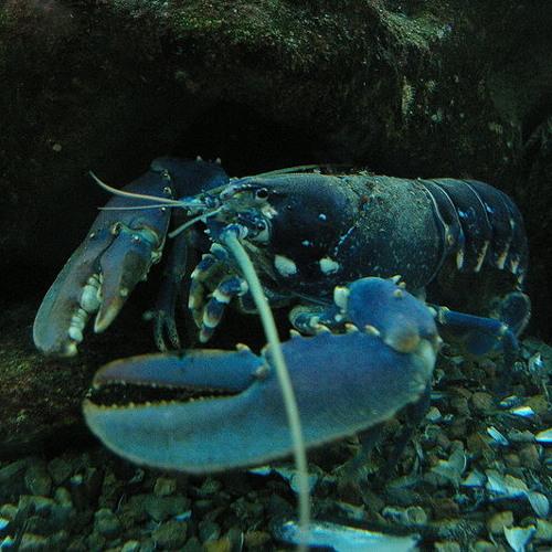 R. Lobster's avatar