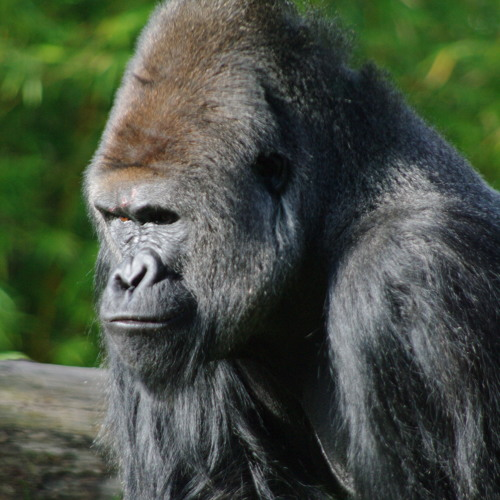 bighomiedeuce's avatar