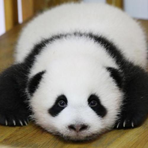 Dr. Panda's avatar
