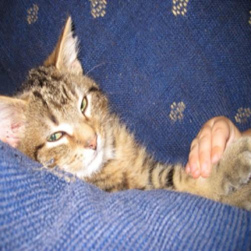 kitcat16's avatar